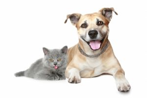house call veterinary services in Los Angeles