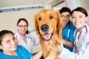 ultrasound cancer screening for large dogs in los angeles