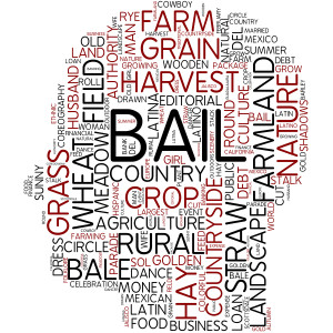 understanding the bail bond process