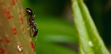 Ant Pest Control Austin