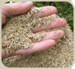seeding-01