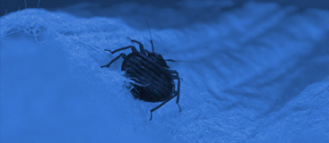bed bug heat treatments Las Vegas