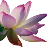 Lotus_for_Yoga_website-sm