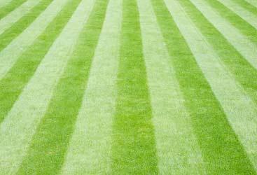 lawn-care-services-cta