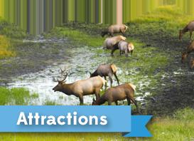 attractions-cta