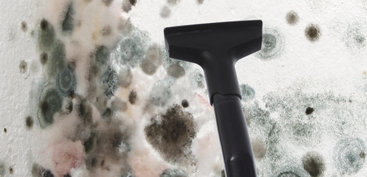 We offer the best black mold removal service in Colorado!