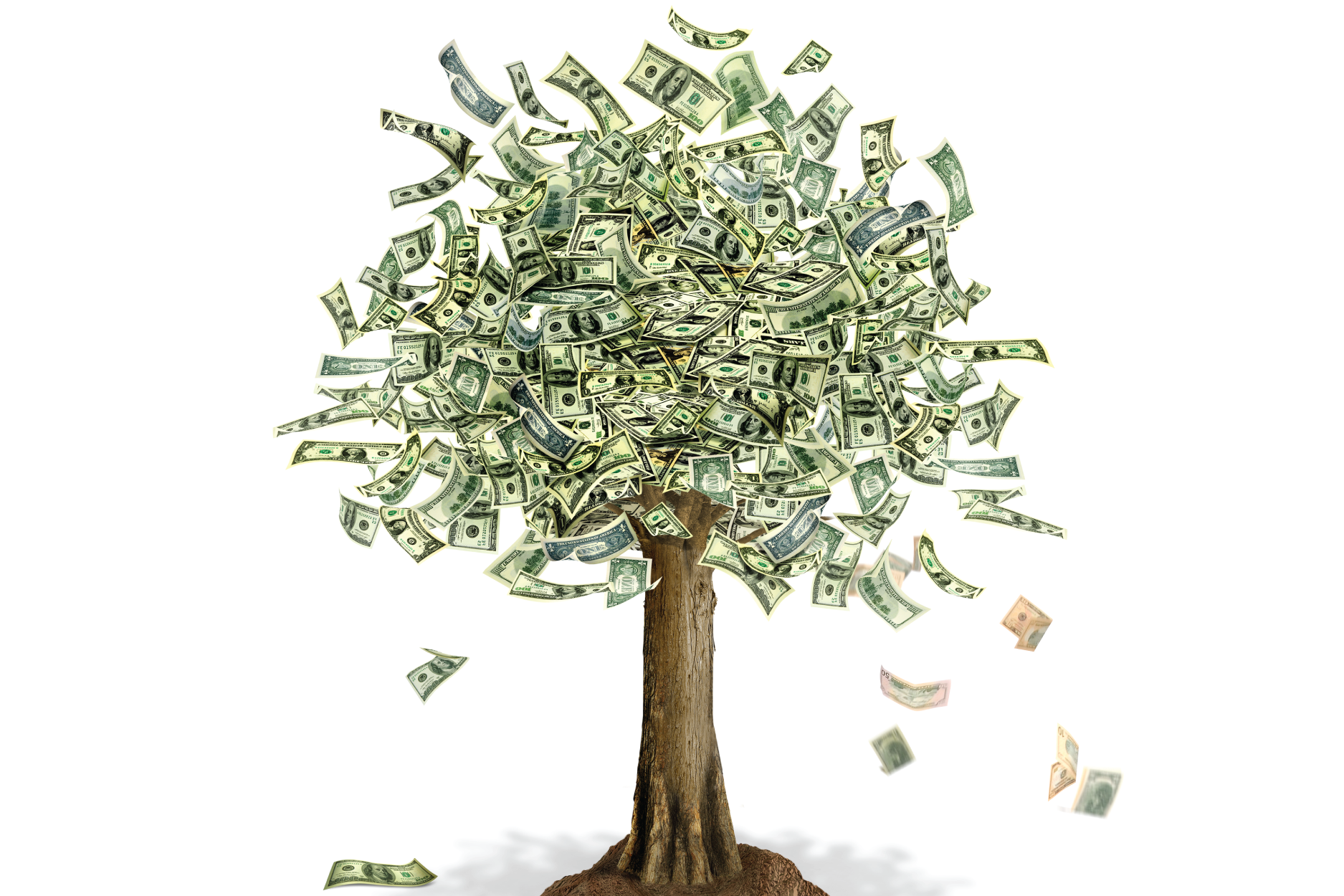 Moneytree_web-01