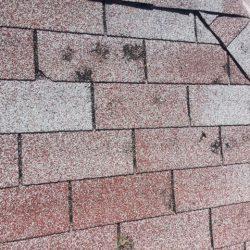 Wheatridge hail damage