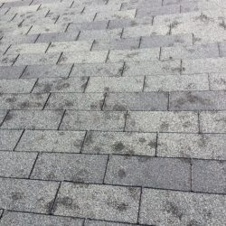 Hail Damage roof in Highlands