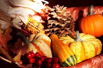 pumpkins_image1