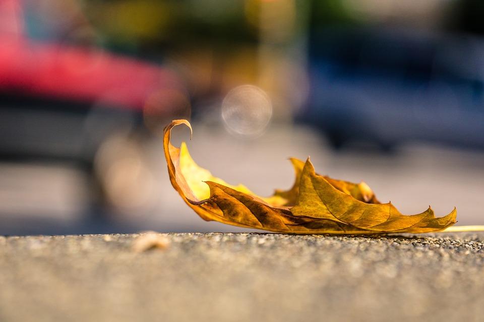 leaf-1082118_960_720