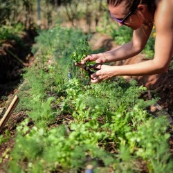 Participate in organic gardening at our yoga retreat center.