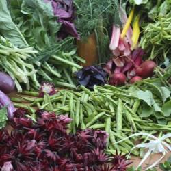 Enjoy the organic garden at our yoga retreat center.