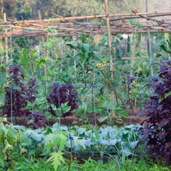 Grow organic fruit and vegetables with us at our Goa yoga retreat.