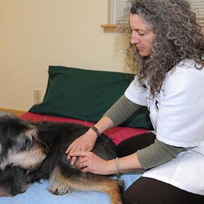 Holistic veterinary care.