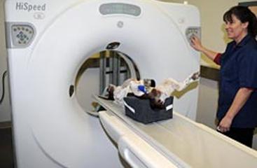 We offer advanced animal diagnostics