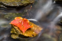 A colorful, wet autumn leaf rests on a rock surrounded by the flowing water of a small creek.